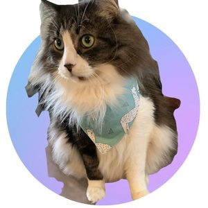 Llahma print cat or small dog bandana
